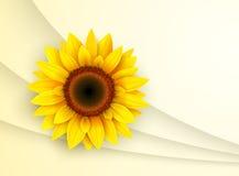 Hintergrund mit Sonnenblume, stock abbildung