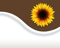 Hintergrund mit Sonnenblume lizenzfreie abbildung