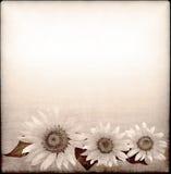 Hintergrund mit Sonnenblumezeichnung in der grunge Art Lizenzfreie Stockbilder
