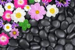 Hintergrund mit Steinen und Blumen Stockbilder