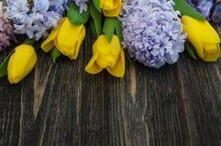 Hintergrund mit Tulpen und Hyazinthen Stockfotografie