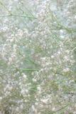 Hintergrund mit weißen Gypsophilablumen Stockfoto