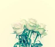Hintergrund mit weißen Rosen Lizenzfreies Stockbild