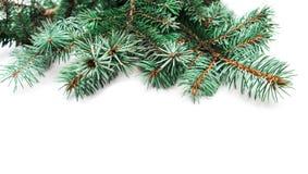 Hintergrund mit Weihnachtsbaumasten und Raum für Text für Stockbild