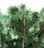 Hintergrund mit Weihnachtsbaumasten und Raum für Text für Stockfotografie