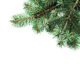 Hintergrund mit Weihnachtsbaumasten und Raum für Text für Lizenzfreie Stockbilder