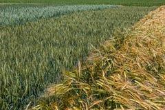 Hintergrund mit Weizen 16 Stockfotografie