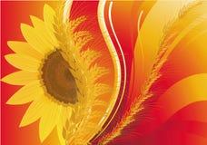Hintergrund mit Weizen und einer Sonnenblume Stockfotografie