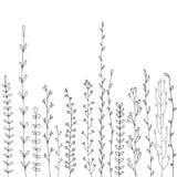 Hintergrund mit Zeichnungskräutern und -blumen Lizenzfreie Stockbilder