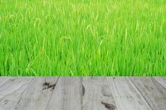 Hintergrund oder Beschaffenheit auf dem Reis Stockfotografie