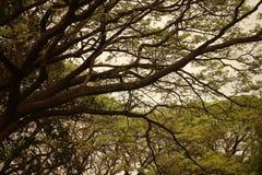 Hintergrund oder Beschaffenheit des blauen Himmels und der Bäume Stockbild