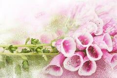 Hintergrund - purpurrote Blumen Lizenzfreies Stockfoto