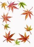 Hintergrund-Rand des japanischen Ahornholzes und des Acer-Urlaubs stock abbildung