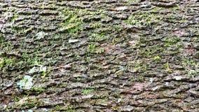 Hintergrund, raue hölzerne Beschaffenheit, Baumstamm, Brauntöne, raue hölzerne Fläche, vorherrschende braune Farbe Lizenzfreies Stockbild
