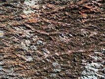 Hintergrund, raue hölzerne Beschaffenheit, Baumstamm, Brauntöne, raue hölzerne Fläche, vorherrschende braune Farbe Lizenzfreie Stockfotografie