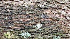 Hintergrund, raue hölzerne Beschaffenheit, Baumstamm, Brauntöne, raue hölzerne Fläche, vorherrschende braune Farbe Stockbild