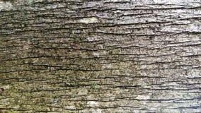 Hintergrund, raue hölzerne Beschaffenheit, Baumstamm, Brauntöne, raue hölzerne Fläche, vorherrschende braune Farbe Stockfotografie
