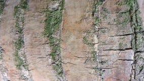 Hintergrund, raue hölzerne Beschaffenheit, Baumstamm, Brauntöne, raue hölzerne Fläche, vorherrschende braune Farbe Stockfotos
