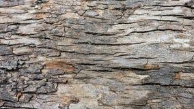 Hintergrund, raue hölzerne Beschaffenheit, Baumstamm, Brauntöne, raue hölzerne Fläche, vorherrschende braune Farbe Lizenzfreie Stockfotos
