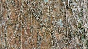 Hintergrund, raue hölzerne Beschaffenheit, Baumstamm, Brauntöne, raue hölzerne Fläche, vorherrschende braune Farbe Stockfoto