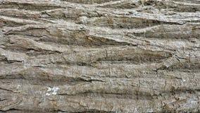 Hintergrund, raue hölzerne Beschaffenheit, Baumstamm, Brauntöne, raue hölzerne Fläche, vorherrschende braune Farbe Stockbilder
