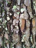 Hintergrund, raue hölzerne Beschaffenheit, Baumstamm, Brauntöne, raue hölzerne Fläche, vorherrschende braune Farbe Lizenzfreies Stockfoto
