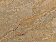 Hintergrund, raue hölzerne Beschaffenheit, Baumstamm, Brauntöne, raue hölzerne Fläche, vorherrschende braune Farbe Lizenzfreie Stockbilder