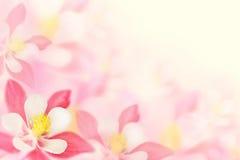 Hintergrund - rosa Blumen Lizenzfreie Stockbilder