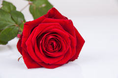 Hintergrund Rose Stockbilder