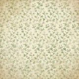 Hintergrund-schmutziges Gänseblümchen Allover Lizenzfreie Stockfotografie
