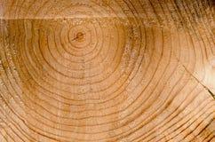 Hintergrund schnitt Baumkabel-Alterszeichen-Nahaufnahmemakro Stockfoto