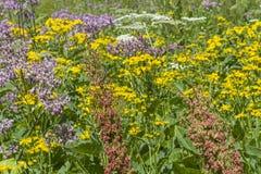 Hintergrund Sommerwiese Stock Foto's