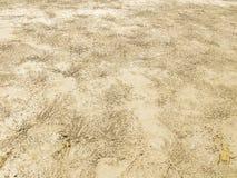 Hintergrund Spuren des Lebens der kleinen Krabben, die auf der Küste leben lizenzfreies stockfoto