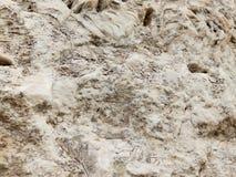 Hintergrund Stein voll von den Marinefossilien Stockfotografie