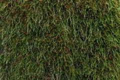 Hintergrund und Beschaffenheit des Grases und des Mooses stockfotografie