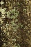 Hintergrund und Beschaffenheit vom Baumstamm Dunkelbraune Farbe und Lizenzfreie Stockbilder