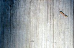 Hintergrund- und Beschaffenheitsfoto des trockenen Bambusbaums lizenzfreie stockbilder