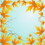 Hintergrund und Blätter Lizenzfreie Stockfotografie