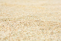Hintergrund verursacht durch viel Reis Lizenzfreies Stockbild