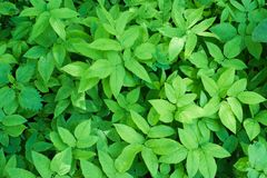 Hintergrund vieler Grünpflanzen stockfotos