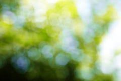 Hintergrund vom Baum und vom Himmel Lizenzfreie Stockfotografie