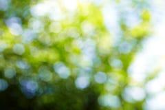Hintergrund vom Baum und vom Himmel Lizenzfreie Stockfotos