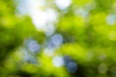 Hintergrund vom Baum und vom Himmel Lizenzfreies Stockbild