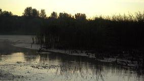 Hintergrund vom feinen Sand Gelbe Farbversion stock footage