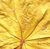 Hintergrund vom Herbstblatt Stockfoto