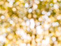 Hintergrund vom natürlichen Licht Lizenzfreies Stockbild