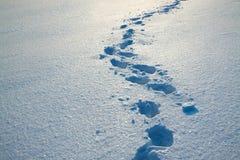 Hintergrund vom Schnee und von den Spuren Stockfotografie