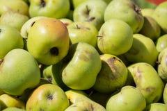 Hintergrund von Äpfeln Stockbild
