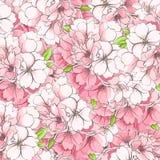 Hintergrund von Applebaumblumen Stockfotografie