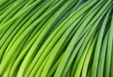 Hintergrund von a-Bündel frischen Knoblauchschnittlauchen blüht (grünes Nira Stockfotografie